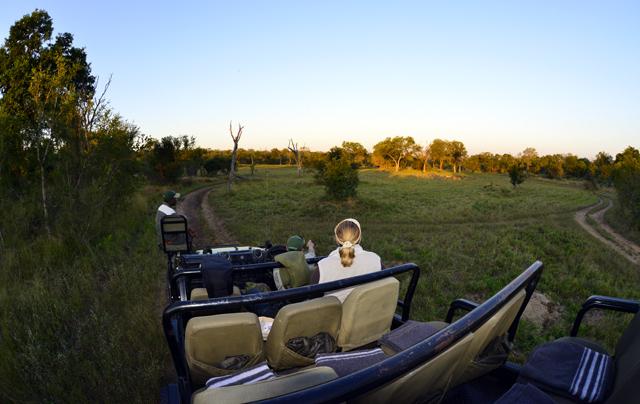 Early morning Safari drive