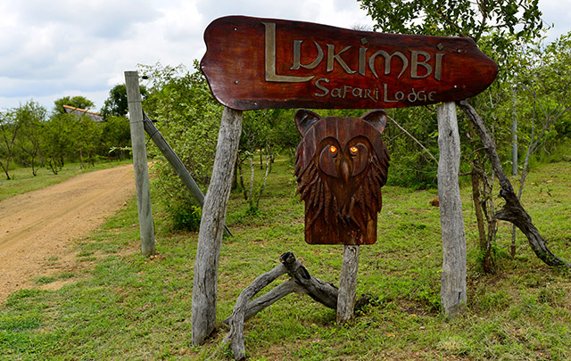 Lukimbi - lion and giant eagle owl