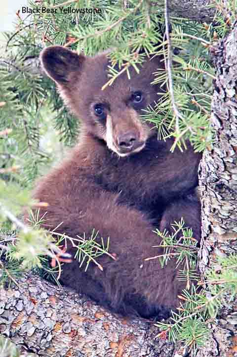 Photographing Bear Cubs in the Wild