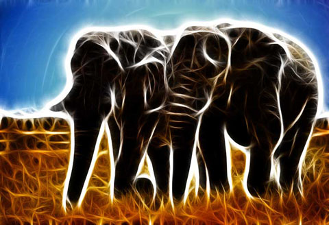 elephant enhanced with Fractalius
