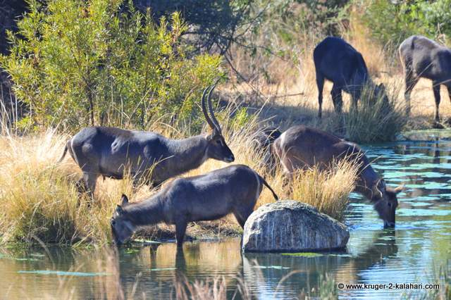 The waterhole can get busy