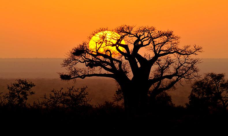 Baobab Sunrise near Punda Maria, Kruger Park