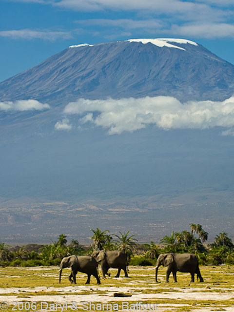 Mount Kilimanjaro from Amboseli