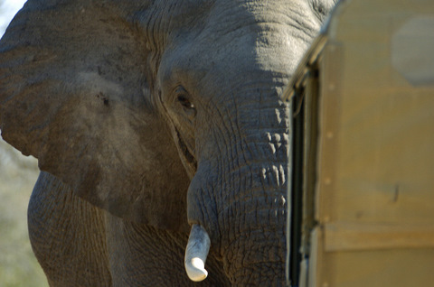 Elephant being challenged by a 'Jeep Jockey' - zero game viewing etiquette!