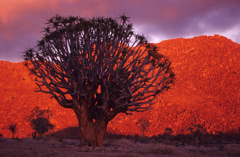Sunrise, Richtersveld National Park, South Africa
