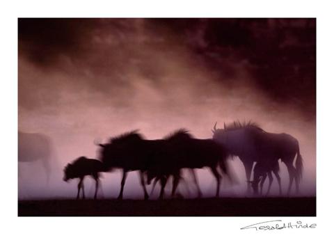 Dusty Kalahari riverbed