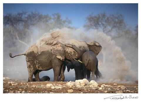 white dust Etosha