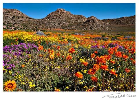 west-coast flowers