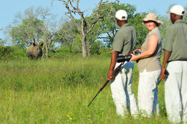 White rhino stand-off