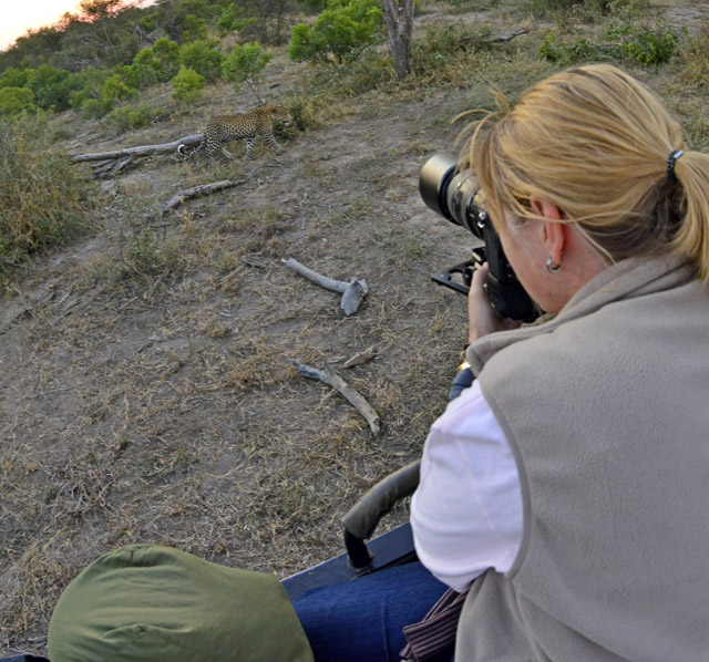 Photographing leopard from Safari vehicle
