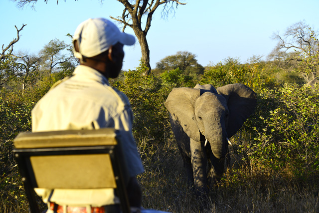 Game Tracker with Elephant
