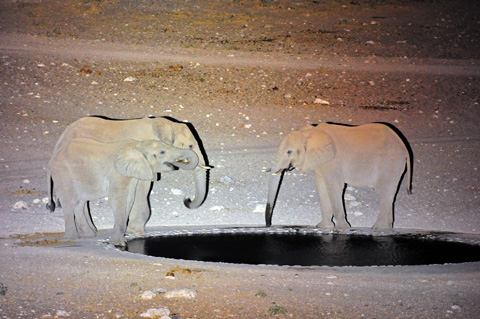 Elephants lit with Lightforce 240 Blitz with Xenon bulb