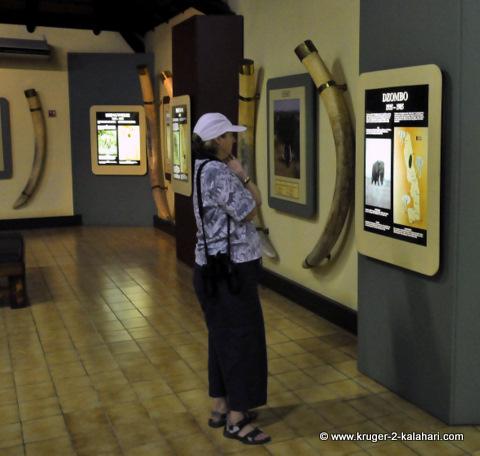 Letaba elephant museum