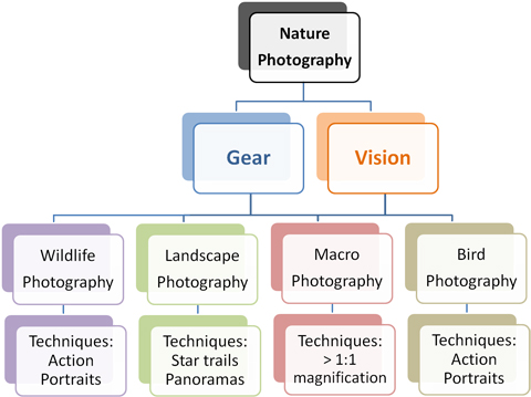 Types Of Photography Nature Photography