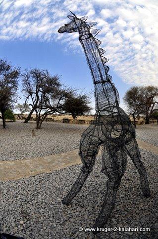 wire giraffe at Okaukuejo Etosha