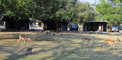 Animals in Pretoriuskop camp
