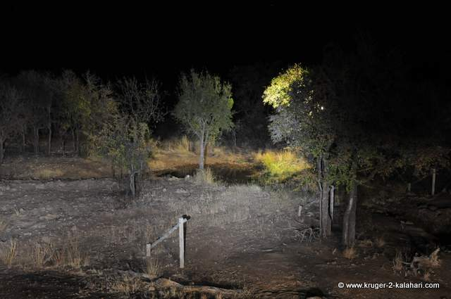 Waterhole at night