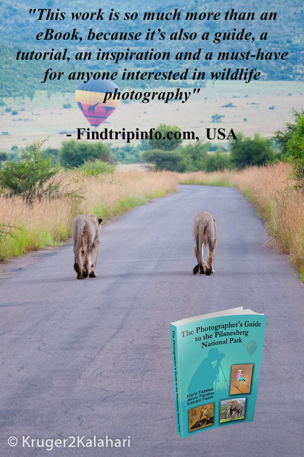 Pilanesberg lions
