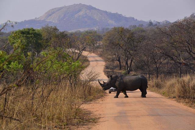 Kruger Trip Report September 2013 3 Days On A Self