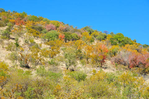 tamboti winter colours in pilanesberg