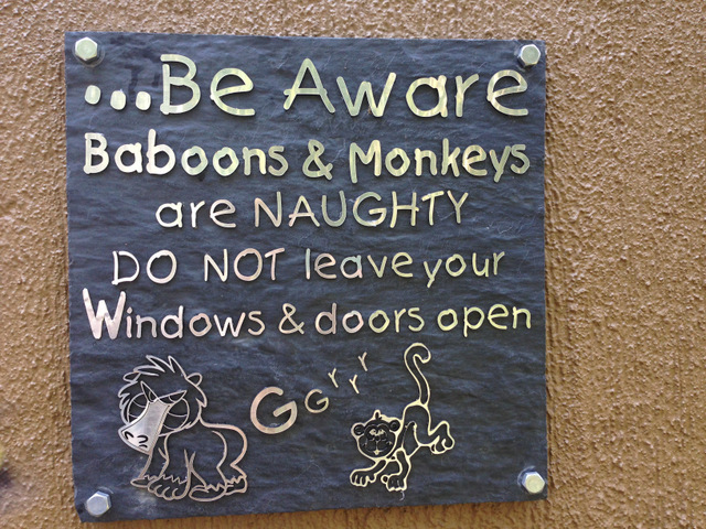 look out for the baboons and monkeys
