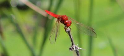 Dragon fly number one.