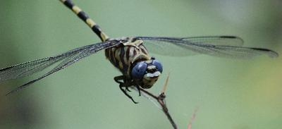 Dragon fly number two.