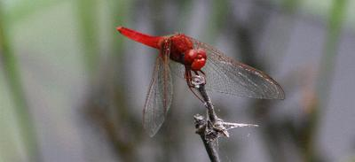 Dragon fly number three.