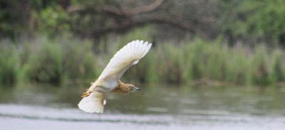 The Heron lowers flight pattern.