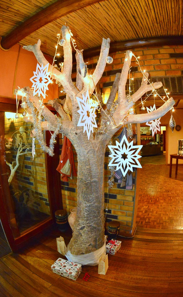 Quivertree Christmas Tree