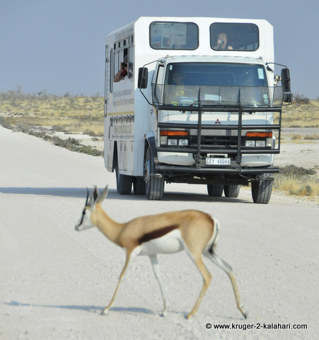 Tour group on safari in Etosha