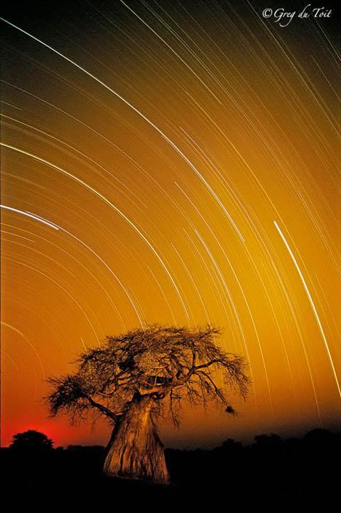 Baobab start trail