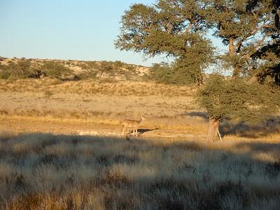 Kudu at Grootkolk