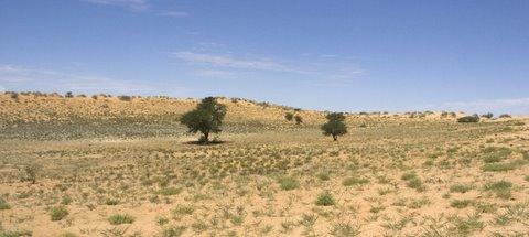 Lower dune road in Kalahari