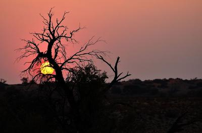 Towards water - the life of the Kalahari