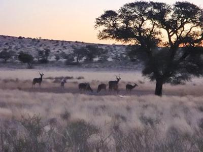 Herd of Kudu at Grootkolk