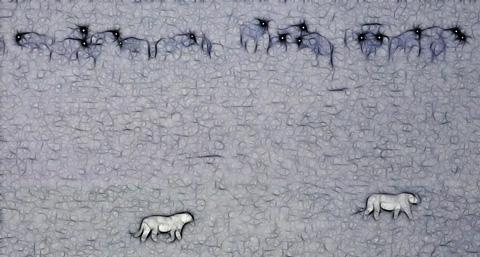 Lions walking past wildebeest at night