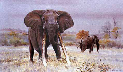 Magnificent Seven  - mafunyane