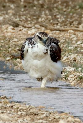 Standing on one foot bathing