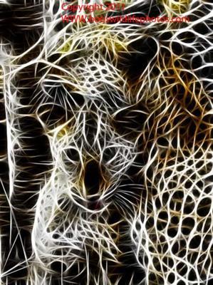 Sabi Leopards