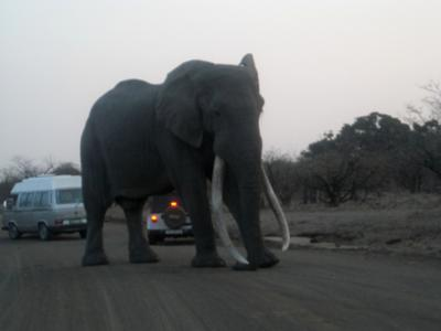 Taken near Letaba on 6 Sep 2008. The guy in the white jeep couldn't believe his eyes at the size.