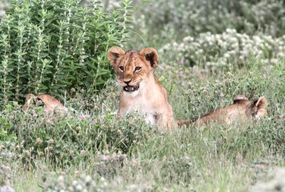 Cubs 1