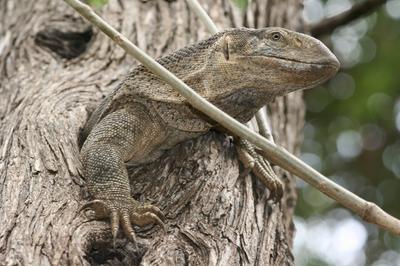 in a tree at Shibwidzi day vissitors area.