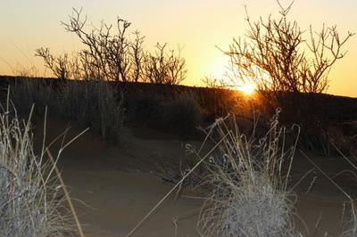 Sunset over the dune in the dry pan.