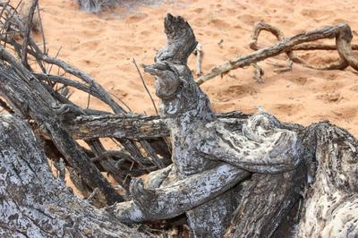 Embraced to death, Figures embraced in the tree trunk of a Camel thorn tree.