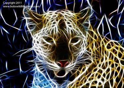 Psychedelic Leopard