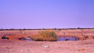 Chudop waterhole full of animals