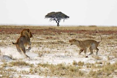 Female stops the large Nomad