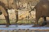 Lions and elephant 3