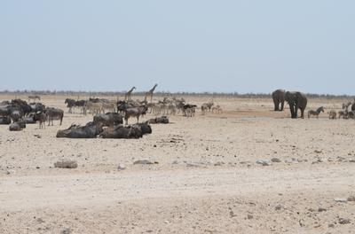 A view of the waterhole